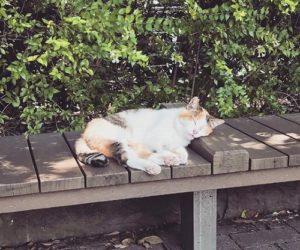 300x250 - 愛宕神社の猫