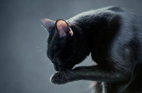 s 2019 12 27 13h11 10 - 黒猫の開運待ち受けとは?黒猫は金運を上げたり勝負運を強くするって本当?