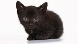 s 2019 12 27 13h11 48 320x180 - 黒猫の開運待ち受けとは?黒猫は金運を上げたり勝負運を強くするって本当?