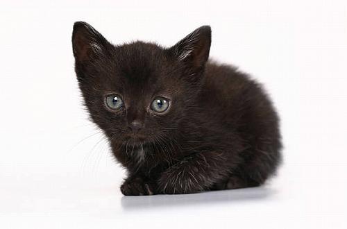 s 2019 12 27 13h11 48 - 黒猫の開運待ち受けとは?黒猫は金運を上げたり勝負運を強くするって本当?