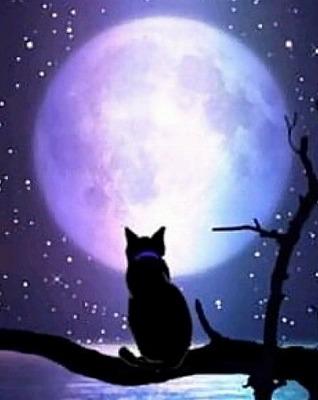 s 2019 12 27 13h13 17 - 黒猫の開運待ち受けとは?黒猫は金運を上げたり勝負運を強くするって本当?