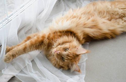 s 2020 01 10 09h39 47 - 猫を飼うと運気が上がる!仕事運を上げる風水を取り入れたい人にもオススメ!