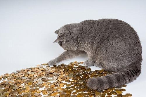 s cat 602944 640 - 芝大神宮の強運お守りは芸能人にも人気!仕事運も金運も上がるスポットとは?