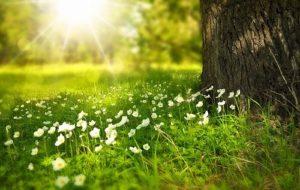 s spring 276014 640 300x190 - s-spring-276014_640