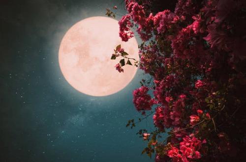 s 2020 06 04 19h42 38 - 満月の名前は月ごとに違う!満月の日は金運が上がるって本当なの?