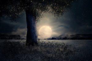 s night 2539411 640 300x199 - s-night-2539411_640